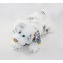 White tiger Sacha cub...